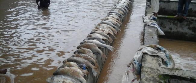 ikan mati longsor cibunian2