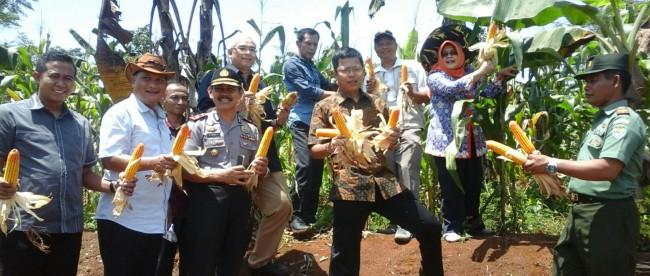 Anggota DPR RI Ichsan Firdaus beserta beberapa pejabat tinggi Kabupaten Bogor pamerkan Jagung dalam acara Launching Program Arisan Sapi Pasundan & Panen Perdana Jagung, Rabu 9/3 (dok. KM)