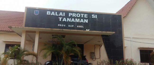 Kantor Balai Proteksi Tanaman Provinsi Kepulauan Babel (dok. KM)