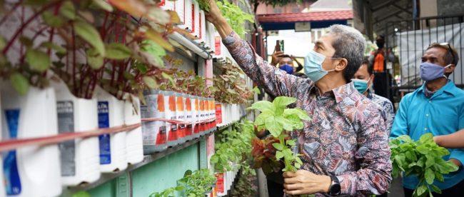 Wakil Wali Kota Bogor Dedie A Rachim Saat Panen Urban Farming Di Kampung Warban Kota Bogor, Jumat 18/12/2020 (dok. KM)