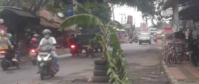 Warga menanam pohon pisang di tengah jalan di Jl. MT Haryono, Subang (dok. KM)