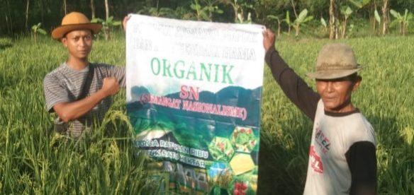 Petani di Kabupaten Bekasi yang menggunakan Formula Pupuk SN (dok. KM)